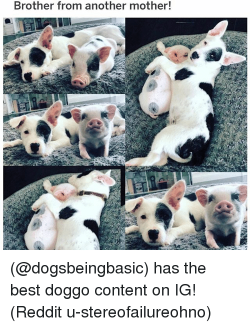 Memes, Reddit, and Best: Brother from another mother! (@dogsbeingbasic) has the best doggo content on IG! (Reddit u-stereofailureohno)