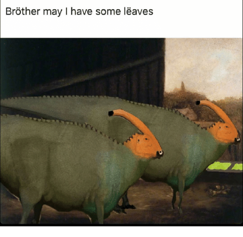 brother may i have some leaves 11678045 ✅ 25 best memes about brother may i have some oats brother may i