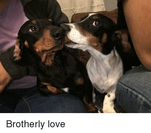 Love, Brotherly Love, and Brotherly