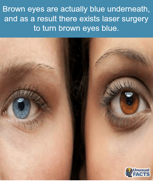 Memes Browns And  F0 9f A4 96 Brown Eyes Are Actually Blue Underneath And As