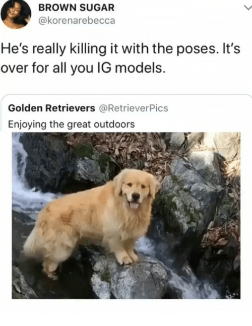 Memes, Models, and Sugar: BROWN SUGAR  @korenarebecca  He's really killing it with the poses. It's  over for all you IG models.  Golden Retrievers @RetrieverPics  Enjoying the great outdoors