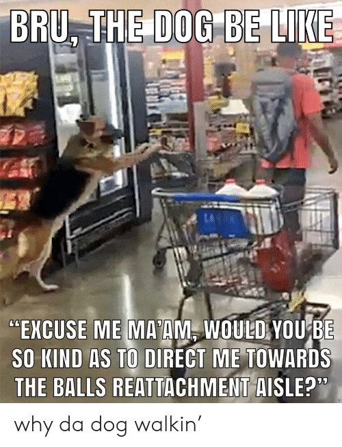 """Be Like, Dog, and Why: BRU, THE DOG  BE LIKE  """"EXCUSE ME MA'AM, WOULD YOUBE  SO KIND AS TO DIRECT ME TOWARDS  THE BALLS REATTACHMENT AISLE?"""" why da dog walkin'"""