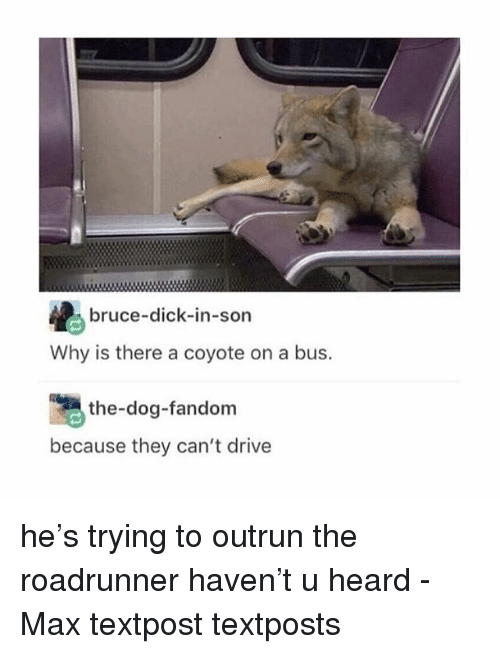 Memes, Coyote, and Dick: bruce-dick-in-son  Why is there a coyote on a bus.  the-dog-fandom  because they can't drive he's trying to outrun the roadrunner haven't u heard - Max textpost textposts