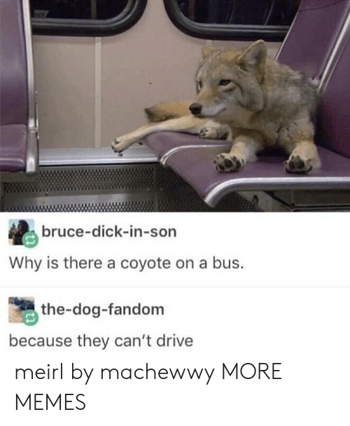 Dank, Memes, and Target: bruce-dick-in-son  Why is there a coyote on a bus.  the-dog-fandom  because they can't drive meirl by machewwy MORE MEMES