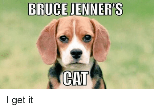 Bruce Jenners Cat I Get It Meme On Meme