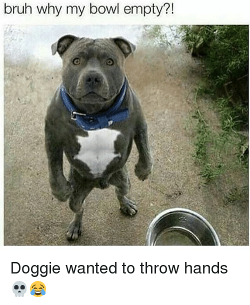 Bruh, Memes, and Bowl: bruh why my bowl empty?! Doggie wanted to throw hands 💀😂