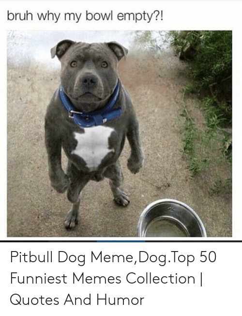 Bruh Why My Bowl Empty?! Pitbull Dog MemeDogTop 50 Funniest Memes