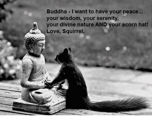 Love, Memes, and Buddha: Buddha I want to have your peace...  your wisdom, your serenity,  A your divine nature AND your acorn hat!  Love, Squirrel
