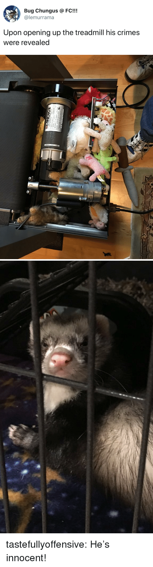 Target, Tumblr, and Blog: Bug Chungus @FC!!!  @lemurrama  Upon opening up the treadmill his crimes  were revealed tastefullyoffensive:  He's innocent!