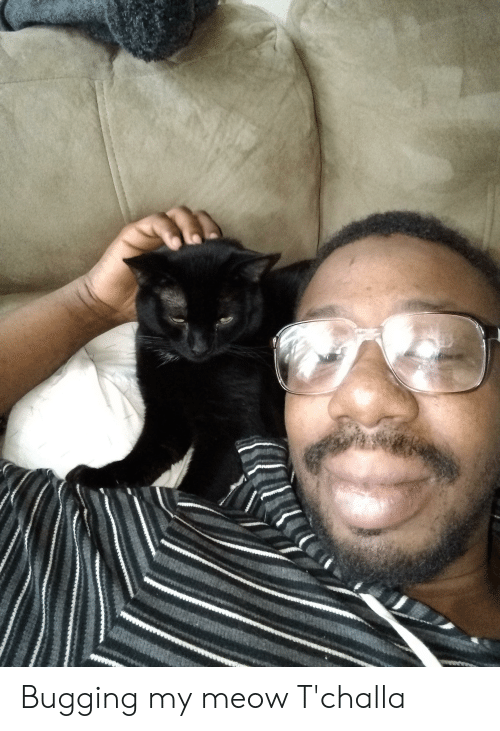 Meow,  Bugging, and Tchalla: Bugging my meow T'challa