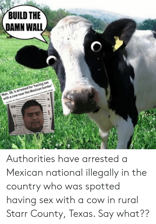 BUILD THE AMN WALL for 'Having Sex With a Cow Near the Mexican