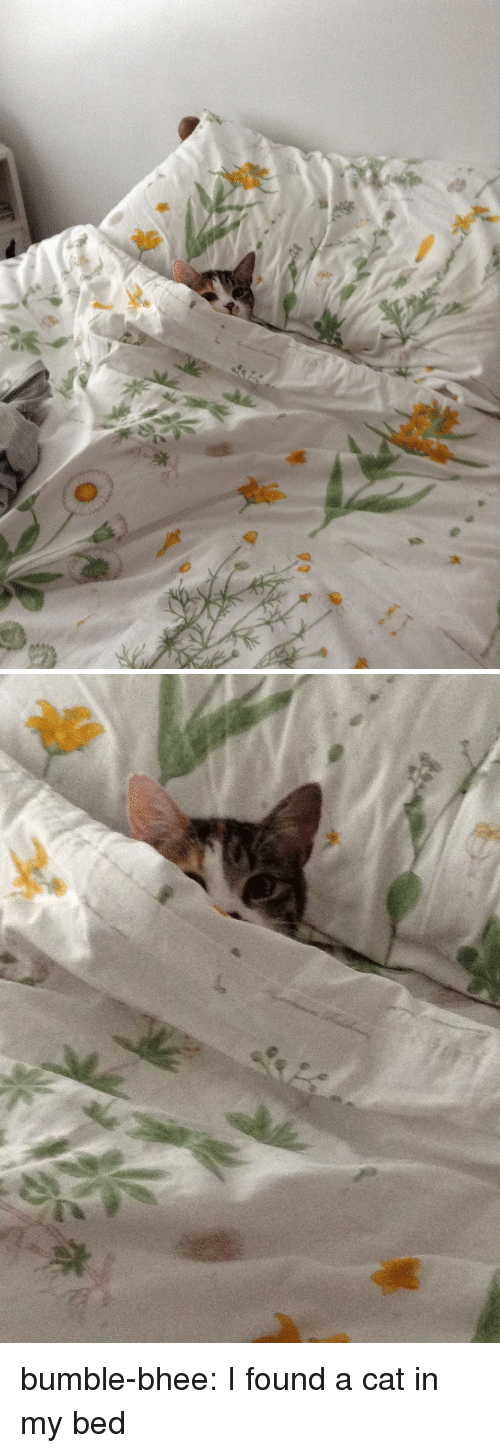 Tumblr, Blog, and Http: bumble-bhee:  I found a cat in my bed