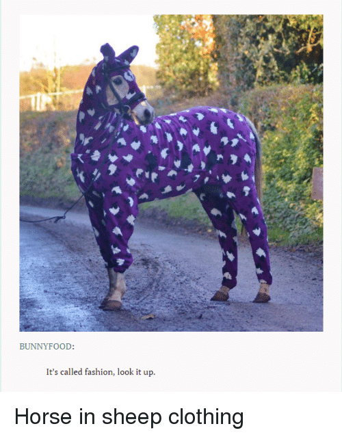 Bunny Food It S Called Fashion Look It Up Horse In Sheep