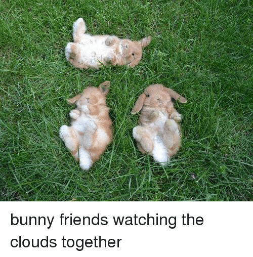 Bunnies, Friends, and Cloud: bunny friends watching the clouds together