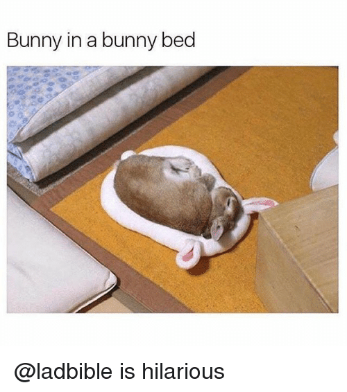 Funny, Hilarious, and Bunny: Bunny in a bunny bed @ladbible is hilarious
