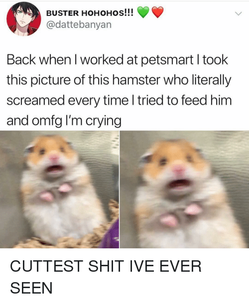 Crying, Girl, and Hamster: BUSTER HOHOHOs!!!  @dattebanyan  Back when I worked at petsmart I took  this picture of this hamster who literally  screamed every time l tried to feed him  and omfg I'm crying CUTTEST SHIT IVE EVER SEEN