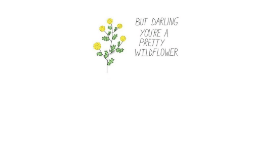 Darling, Wildflower, and Youre: BUT DARLING  YOURE A  PRETTY  WILDFLOWER