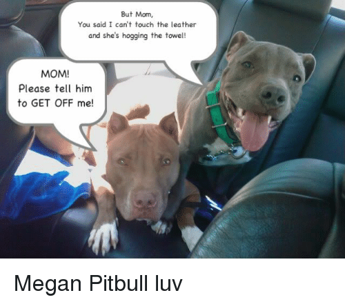 Megan, Memes, and Pitbull: But Mom,  You said I can't touch the leather  and she's hogging the towel!  MOM!  Please tell him  to GET OFF me! Megan Pitbull luv