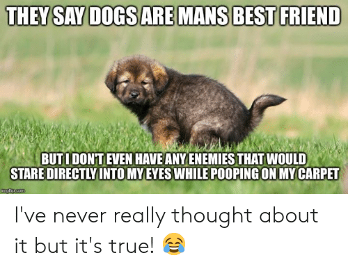 Memes, True, and Never: BUTIDON'T EVEN HAVE ANYENEMIES THAT WOULD  STARE DIRECTLYINTO MY EYESWHILE POOPING ON MY CARPET I've never really thought about it but it's true! 😂