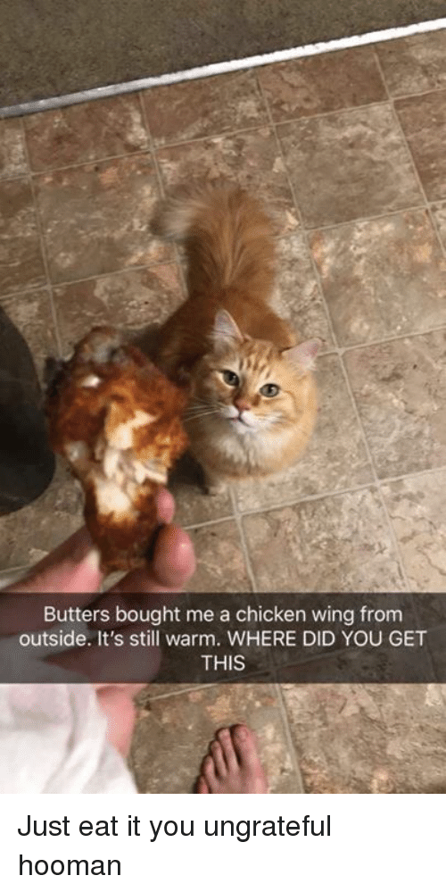 Dank, Chicken, and 🤖: Butters bought me a chicken wing from  outside. It's still warm. WHERE DID YOU GET  THIS Just eat it you ungrateful hooman