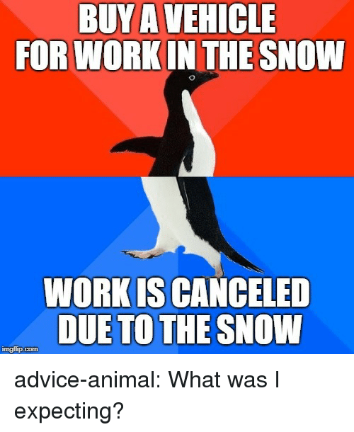 Advice, Tumblr, and Work: BUY A VEHICLE  FOR WORK IN THE SNOW  WORK IS CANCELED  DUE TO THE SNOW  imgfilip.com advice-animal:  What was I expecting?