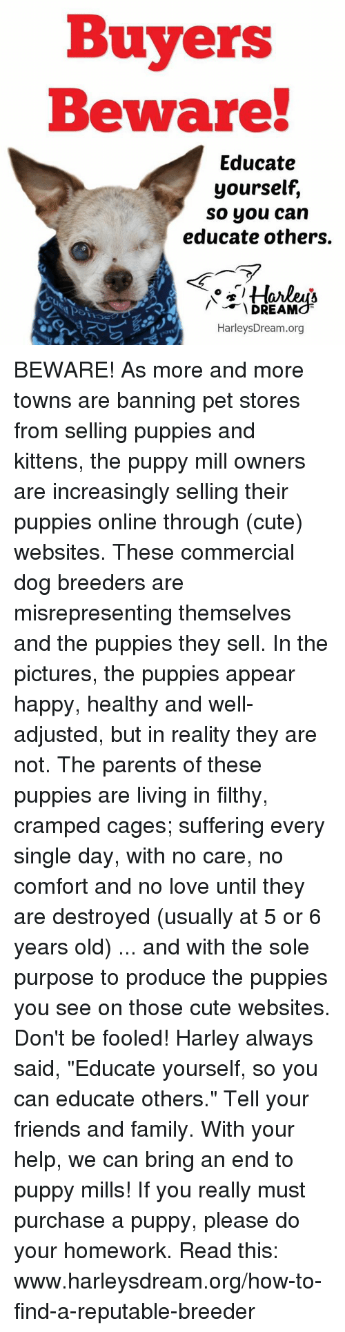"""Cute, Family, and Friends: Buyers  Beware  Educate  yourself,  so you can  educate others.  Lu  DREAM  HarleysDream.org BEWARE! As more and more towns are banning pet stores from selling puppies and kittens, the puppy mill owners are increasingly selling their puppies online through (cute) websites. These commercial dog breeders are misrepresenting themselves and the puppies they sell. In the pictures, the puppies appear happy, healthy and well-adjusted, but in reality they are not. The parents of these puppies are living in filthy, cramped cages; suffering every single day, with no care, no comfort and no love until they are destroyed (usually at 5 or 6 years old) ... and with the sole purpose to produce the puppies you see on those cute websites. Don't be fooled!  Harley always said, """"Educate yourself, so you can educate others."""" Tell your friends and family. With your help, we can bring an end to puppy mills!  If you really must purchase a puppy, please do your homework. Read this: www.harleysdream.org/how-to-find-a-reputable-breeder"""