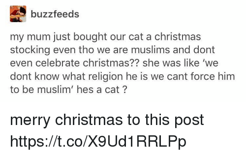 Christmas, Muslim, and Merry Christmas: buzzfeeds  my mum just bought our cat a christmas  stocking even tho we are muslims and dont  even celebrate christmas?? she was like 'we  dont know what religion he is we cant force him  to be muslim' hes a cat? merry christmas to this post https://t.co/X9Ud1RRLPp