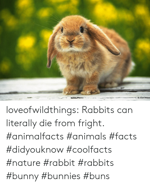 By Dream-Wallpap Loveofwildthings Rabbits Can Literally Die