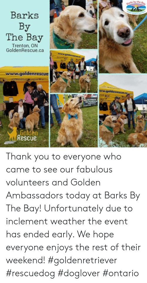 Memes, Thank You, and Today: by the  Barks  The Bay  Trenton, ON  GoldenRescue.ca  www.goldenrescue  goldenrescue.ee  Gald  Rescue Thank you to everyone who came to see our fabulous volunteers and Golden Ambassadors today at Barks By The Bay! Unfortunately due to inclement weather the event has ended early. We hope everyone enjoys the rest of their weekend!  #goldenretriever #rescuedog #doglover #ontario