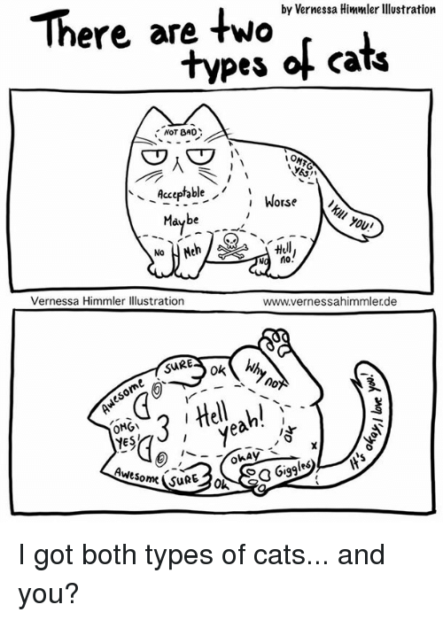 by vernessa himmler llustration there are two types of cats 21596384 ✅ 25 best memes about next uk next uk memes