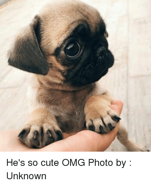 omg cute he memes unknown hes