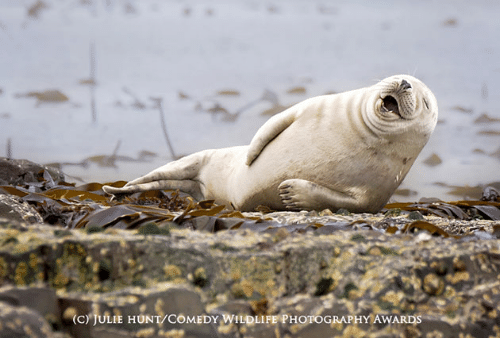 Photography, Comedy, and Awards: (C) JULIE HUNT COMEDY WILDLIFE PHOTOGRAPHY AWARDS