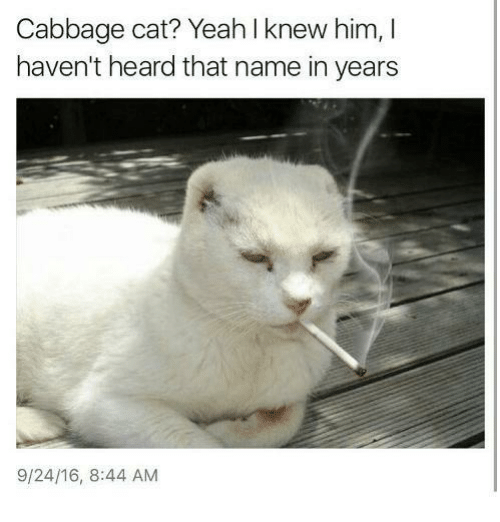 Yeah, Dank Memes, and Cat: Cabbage cat? Yeah l knew him, I  haven't heard that name in years  9/24/16, 8:44 AM