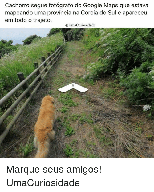Google, Memes, and Google Maps: Cachorro segue fotografo do Google Maps que estava  mapeando uma provincia na Coreia do Sul e apareceu  em todo o trajeto.  @Umacuriosidade Marque seus amigos! UmaCuriosidade