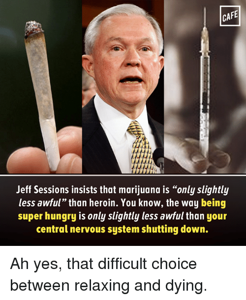 cafe jeff sessions insists that marijuana is only slightly less 17779107 25 best nervous system memes i dont memes, teamironman memes
