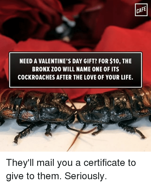 CAFE NEED A VALENTINE'S DAY GIFT? FOR$10 THE BRONX Z00