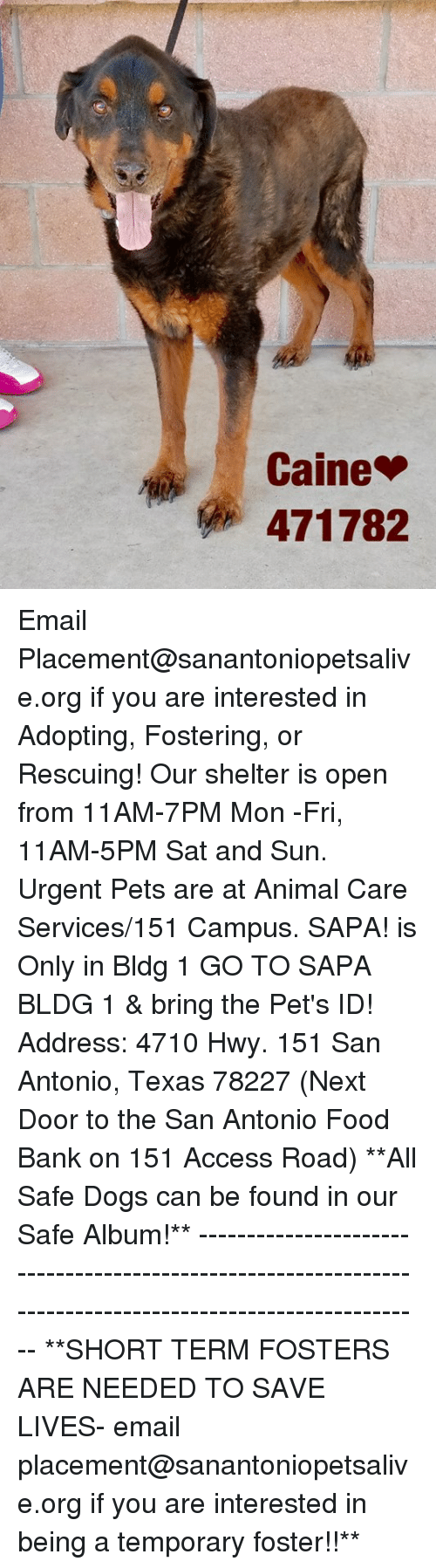Dogs, Food, and Memes: Caine  471782 Email Placement@sanantoniopetsalive.org if you are interested in Adopting, Fostering, or Rescuing!  Our shelter is open from 11AM-7PM Mon -Fri, 11AM-5PM Sat and Sun.  Urgent Pets are at Animal Care Services/151 Campus. SAPA! is Only in Bldg 1 GO TO SAPA BLDG 1 & bring the Pet's ID! Address: 4710 Hwy. 151 San Antonio, Texas 78227 (Next Door to the San Antonio Food Bank on 151 Access Road)  **All Safe Dogs can be found in our Safe Album!** ---------------------------------------------------------------------------------------------------------- **SHORT TERM FOSTERS ARE NEEDED TO SAVE LIVES- email placement@sanantoniopetsalive.org if you are interested in being a temporary foster!!**