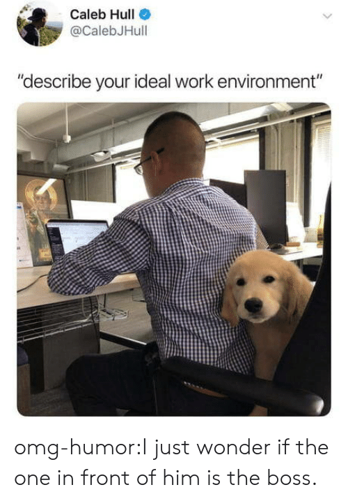 """Omg, Tumblr, and Work: Caleb Hull  @CalebJHull  """"describe your ideal work environment"""" omg-humor:I just wonder if the one in front of him is the boss."""