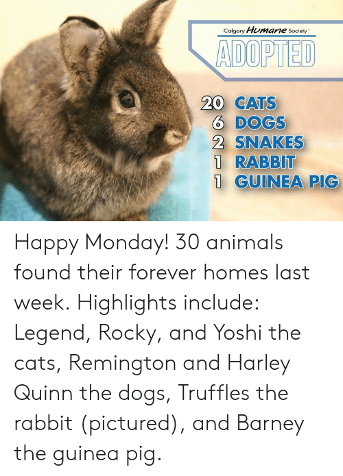 Calgary Humane Society ADOPTED CATS 6 DOGS 2 SNAKES 1 RABBIT