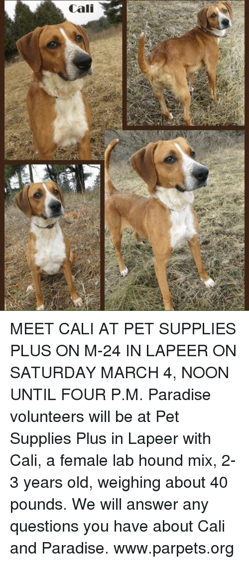 Cali a MEET CALI AT PET SUPPLIES PLUS ON M-24 IN LAPEER ON