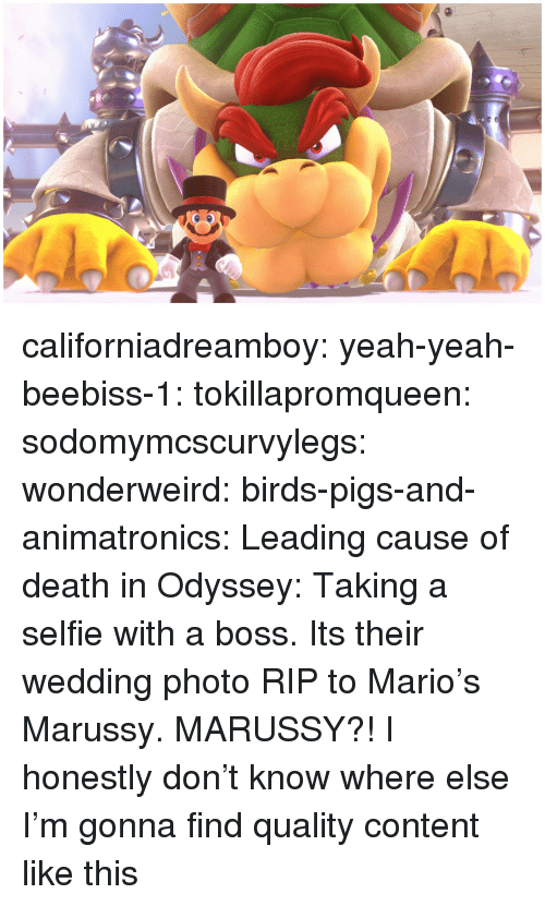 Selfie, Tumblr, and Yeah: californiadreamboy:  yeah-yeah-beebiss-1:  tokillapromqueen:  sodomymcscurvylegs:   wonderweird:  birds-pigs-and-animatronics: Leading cause of death in Odyssey: Taking a selfie with a boss. Its their wedding photo   RIP to Mario's Marussy.   MARUSSY?!     I honestly don't know where else I'm gonna find quality content like this