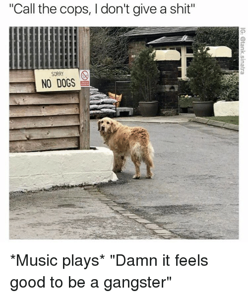 """Dogs, Funny, and Music: """"Call the cops, I don't give a shit""""  SORRY  NO DOGS *Music plays* """"Damn it feels good to be a gangster"""""""