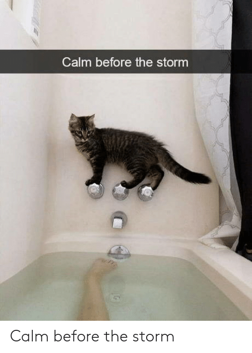 Storm, The Storm, and Calm: Calm before the storm