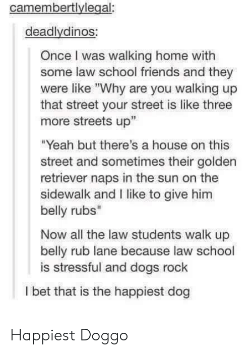 """Dogs, Friends, and I Bet: camembertlylegal:  deadlydinos:  Once I was walking home with  some law school friends and they  were like """"Why are you walking up  that street your street is like three  more streets up""""  """"Yeah but there's a house on this  street and sometimes their golden  retriever naps in the sun on the  sidewalk and I like to give him  belly rubs""""  Now all the law students walk up  belly rub lane because law school  is stressful and dogs rock  I bet that is the happiest dog Happiest Doggo"""