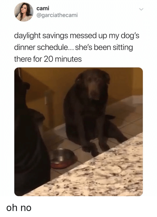 Dogs, Memes, and Daylight Savings: cami  @garciathecami  daylight savings messed up my dog's  dinner schedule... she's been sitting  there for 20 minutes oh no