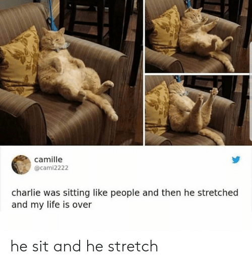 Charlie, Life, and Stretch: camille  @cami2222  charlie was sitting like people and then he stretched  and my life is over he sit and he stretch