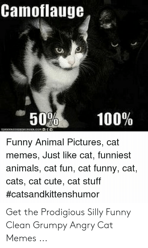 Camoflauge 50 100 E E Funny Animal Pictures Cat Memes Just