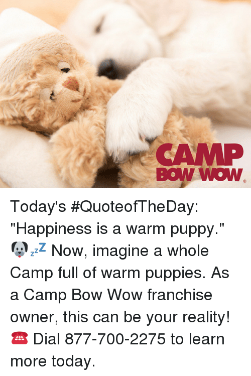 Camp Bow Wow Todays Quoteoftheday Happiness Is A Warm Puppy