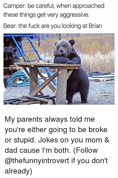 Dad, Parents, and Bear: Camper: be careful, when approached  these things get very aggressive.  Bear: the fuck are you looking at Brian My parents always told me you're either going to be broke or stupid. Jokes on you mom & dad cause I'm both. (Follow @thefunnyintrovert if you don't already)
