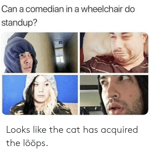 Standup, Cat, and Can: Can a comedian in a wheelchair do  standup? Looks like the cat has acquired the lööps.